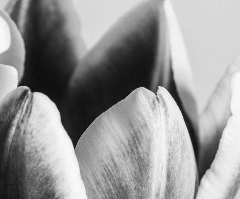 Plants-Macros