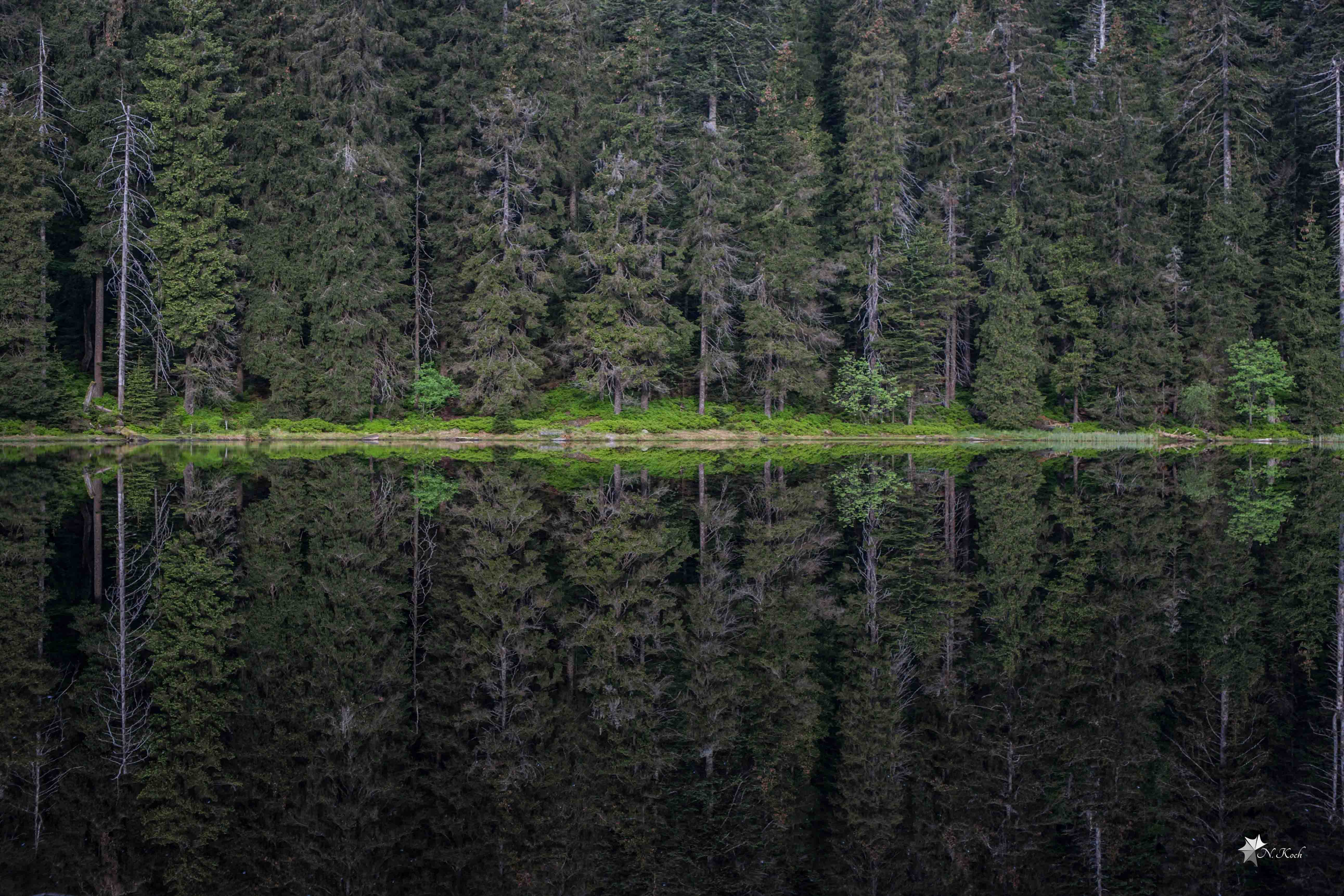 2015, Blackforest | The Wildsee like a mirror